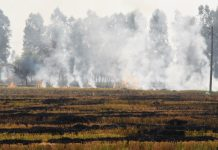 Straw being burnt in a paddy field in Punjab | Nayanika Chatterjee/ThePrint