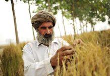 Representational image of an Indian farmer at work