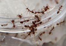 Ants | Nurcholis Anhari Lubis/Getty Images