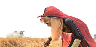An agricultural labourer in a field
