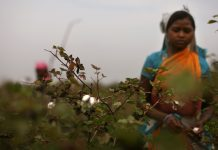 A worker farmer in Vidarbha, Maharashtra | Uriel Sinai/Getty Images