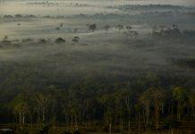 An aerial view of the Amazon rainforest between the cities of Rio Branco and Senador Guiomard, Brazil
