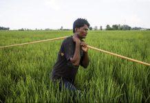 A farmer in Sirsa, Haryana | Prashanth Vishwanathan/Bloomberg