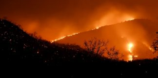 Flames arise after a forest fire at Bandipur Tiger Reserve | PTI