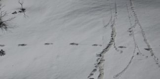 The 'mysterious footprints' of the Yeti which the Indian Army claims to have found | @adgpi/Twitter