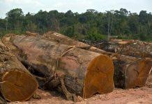 Cut logs sit at a sawmill in Anapu, Brazil.