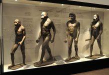 Human evolution gallery at Indian Museum in Kolkata